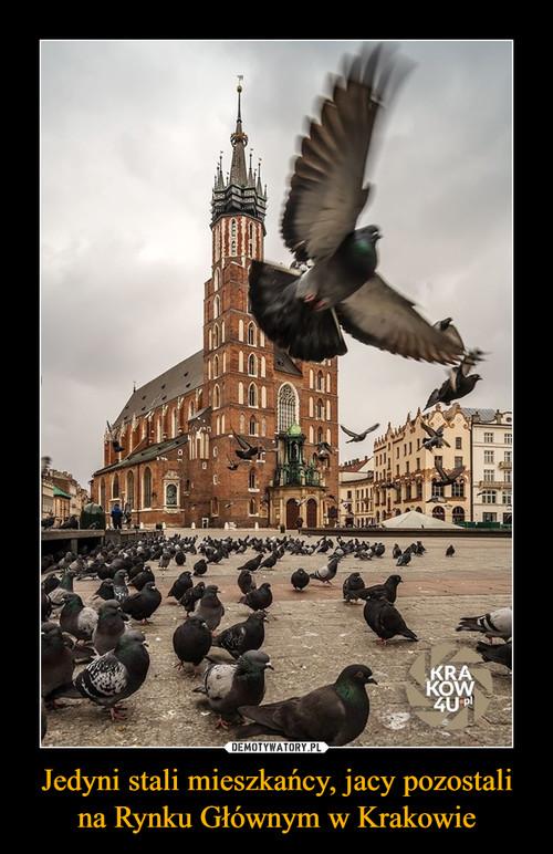 Jedyni stali mieszkańcy, jacy pozostali na Rynku Głównym w Krakowie