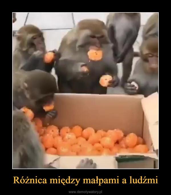 Różnica między małpami a ludźmi –