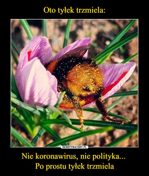 Nie koronawirus, nie polityka... Po prostu tyłek trzmiela –