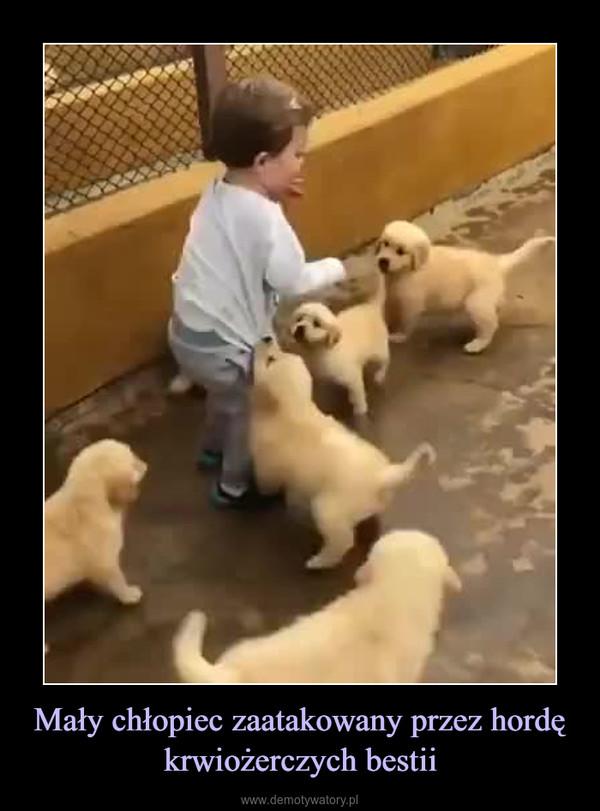 Mały chłopiec zaatakowany przez hordę krwiożerczych bestii –