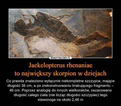Jaekelopterus rhenaniae to największy skorpion w dziejach
