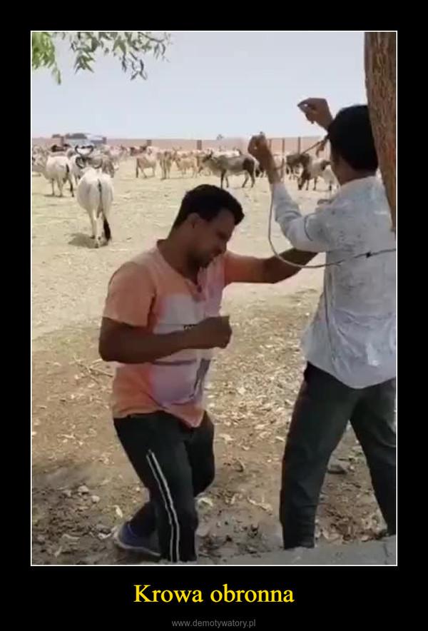 Krowa obronna –