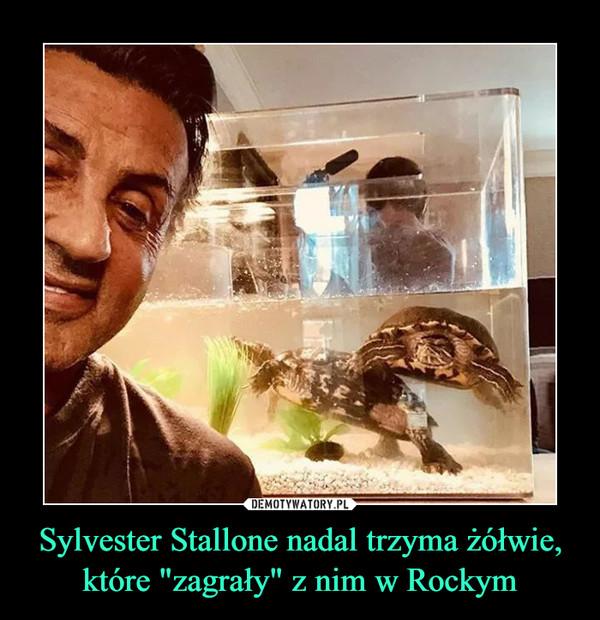 """Sylvester Stallone nadal trzyma żółwie, które """"zagrały"""" z nim w Rockym –"""