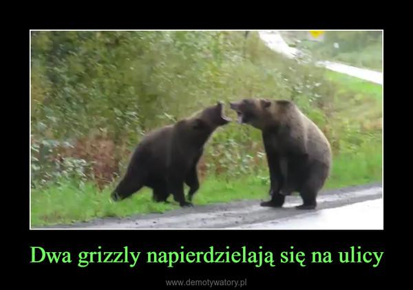 Dwa grizzly napierdzielają się na ulicy –