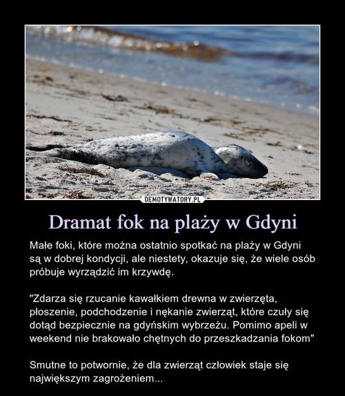 Dramat fok na plaży w Gdyni