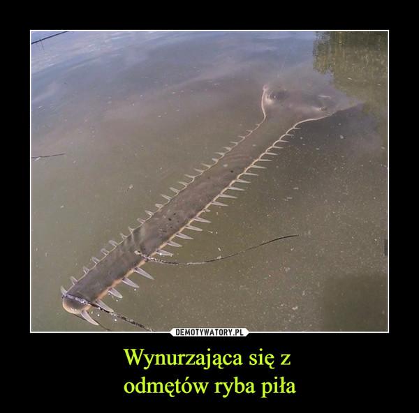 Wynurzająca się z odmętów ryba piła –
