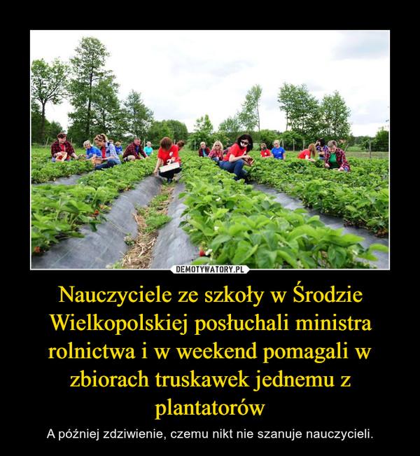 Nauczyciele ze szkoły w Środzie Wielkopolskiej posłuchali ministra rolnictwa i w weekend pomagali w zbiorach truskawek jednemu z plantatorów – A później zdziwienie, czemu nikt nie szanuje nauczycieli.