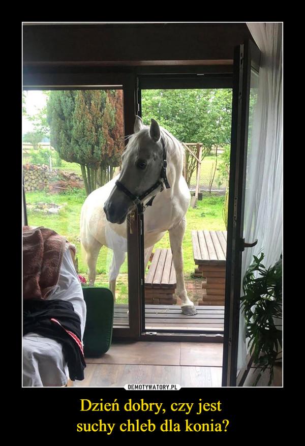 Dzień dobry, czy jest suchy chleb dla konia? –