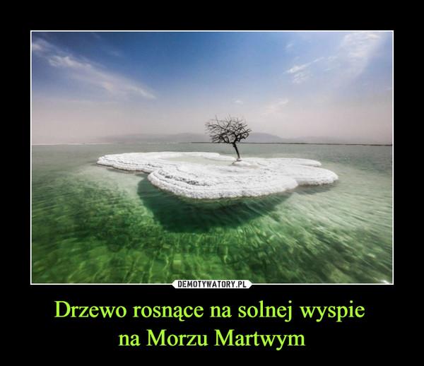 Drzewo rosnące na solnej wyspie na Morzu Martwym –