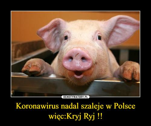 Koronawirus nadal szaleje w Polsce więc:Kryj Ryj !!