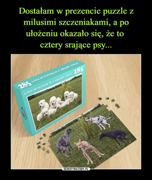 Dostałam w prezencie puzzle z milusimi szczeniakami, a po ułożeniu okazało się, że to  cztery srające psy...