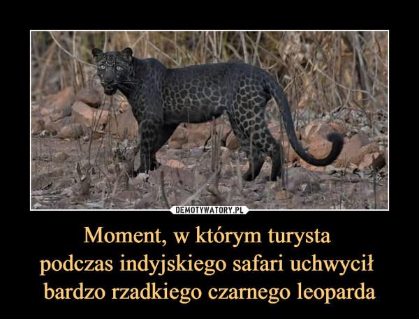 Moment, w którym turysta podczas indyjskiego safari uchwycił bardzo rzadkiego czarnego leoparda –