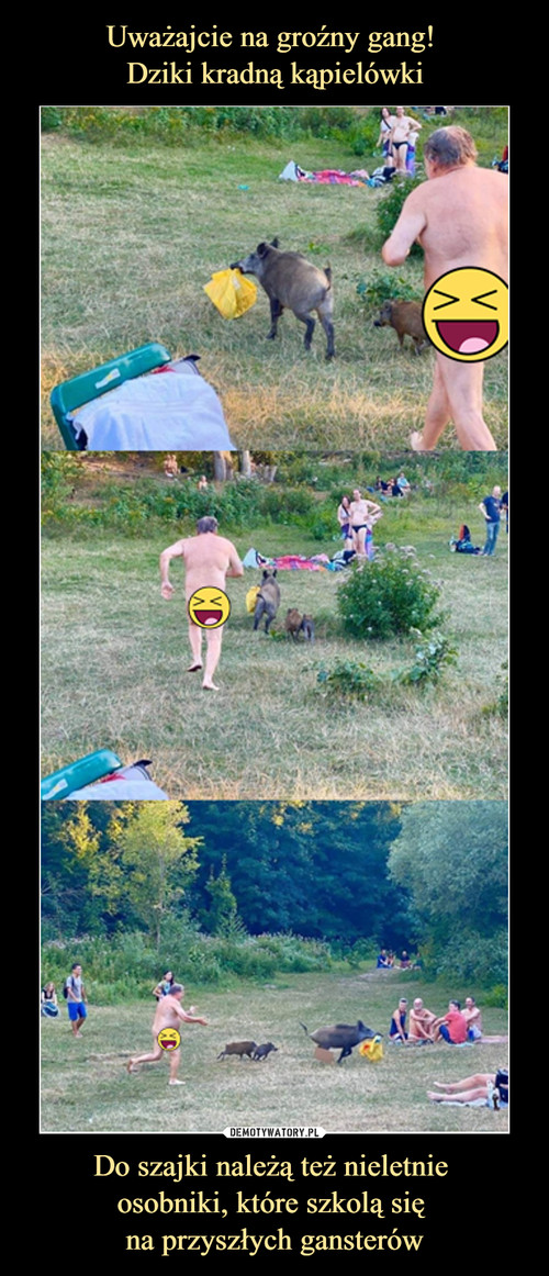Uważajcie na groźny gang!  Dziki kradną kąpielówki Do szajki należą też nieletnie  osobniki, które szkolą się  na przyszłych gansterów