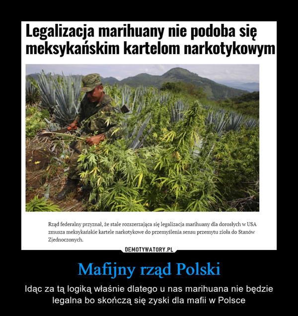 Mafijny rząd Polski – Idąc za tą logiką właśnie dlatego u nas marihuana nie będzie legalna bo skończą się zyski dla mafii w Polsce
