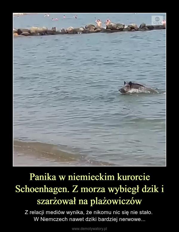 Panika w niemieckim kurorcie Schoenhagen. Z morza wybiegł dzik i szarżował na plażowiczów – Z relacji mediów wynika, że nikomu nic się nie stało. W Niemczech nawet dziki bardziej nerwowe...