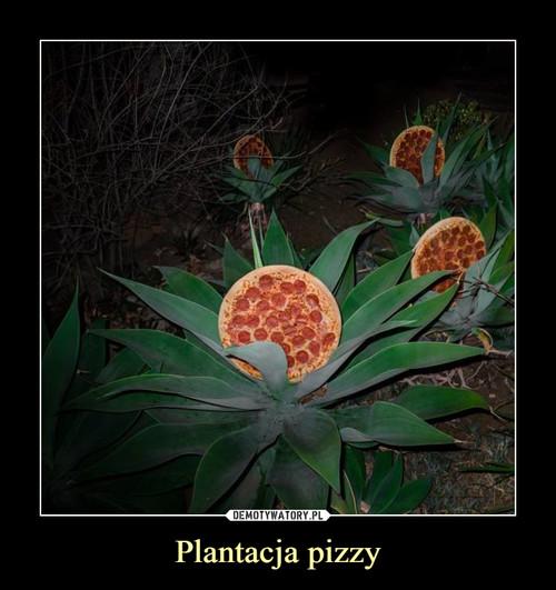 Plantacja pizzy