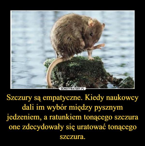Szczury są empatyczne. Kiedy naukowcy dali im wybór między pysznym jedzeniem, a ratunkiem tonącego szczura one zdecydowały się uratować tonącego szczura. –