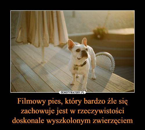 Filmowy pies, który bardzo źle się zachowuje jest w rzeczywistości doskonale wyszkolonym zwierzęciem