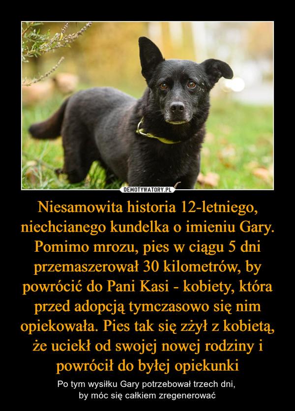 Niesamowita historia 12-letniego, niechcianego kundelka o imieniu Gary. Pomimo mrozu, pies w ciągu 5 dni przemaszerował 30 kilometrów, by powrócić do Pani Kasi - kobiety, która przed adopcją tymczasowo się nim opiekowała. Pies tak się zżył z kobietą, że uciekł od swojej nowej rodziny i powrócił do byłej opiekunki – Po tym wysiłku Gary potrzebował trzech dni, by móc się całkiem zregenerować