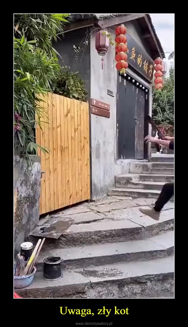 Uwaga, zły kot –