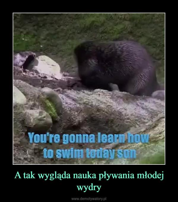 A tak wygląda nauka pływania młodej wydry –
