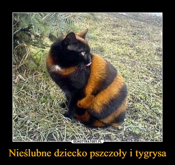 Nieślubne dziecko pszczoły i tygrysa –