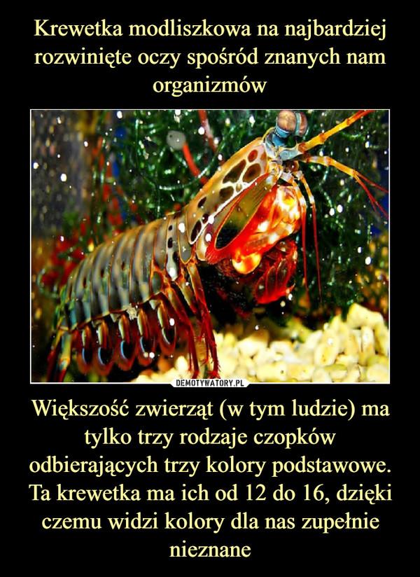 [Obrazek: 1611212083_euxmmr_600.jpg]