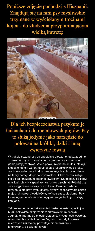 Dla ich bezpieczeństwa przykuto je łańcuchami do metalowych prętów. Psy te służą jedynie jako narzędzie do polowań na króliki, dziki i inną zwierzynę łowną – W trakcie sezonu psy są specjalnie głodzone, gdyż zgodnie z powszechnym przekonaniem - głodne psy skuteczniej gonią swoją zdobycz. Wiele psów umiera na skutek infekcji i kiepskiej opieki weterynaryjnej albo jej całkowitego braku, ale to nie zniechęca hodowców ani myśliwych, ze względu na łatwy dostęp do psów myśliwskich. Słabsze psy zabija się po zakończonym sezonie łowieckim. Długość życia psów myśliwskich w Hiszpanii wynosi około trzech lat. Później psy są zastępowane świeżymi sztukami. Suki hodowlane utrzymuje się przy życiu dłużej. Myśliwi rozpoczynają sezon mając ich nawet dwadzieścia, kończą zaś z pięcioma. Psy, które są ranne lub nie spełniają już swojej funkcji, zostają zabijane.Tak instrumentalne traktowanie i ułożenie zwierząt w kojcu budzi oczywiste skojarzenie z przemysłem mlecznym. Jednak to informacje o losie Galgos czy Podencos wywołują ogromne oburzenie internautów, podczas gdy los krów mlecznych zazwyczaj pozostaje niezauważony i ignorowany. Bo tak jest łatwiej