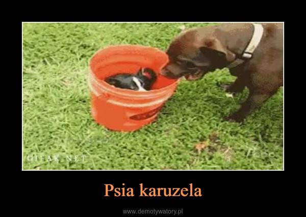 Psia karuzela –