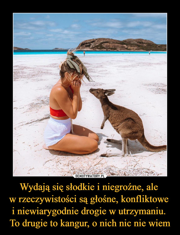 Wydają się słodkie i niegroźne, ale w rzeczywistości są głośne, konfliktowe i niewiarygodnie drogie w utrzymaniu. To drugie to kangur, o nich nic nie wiem –