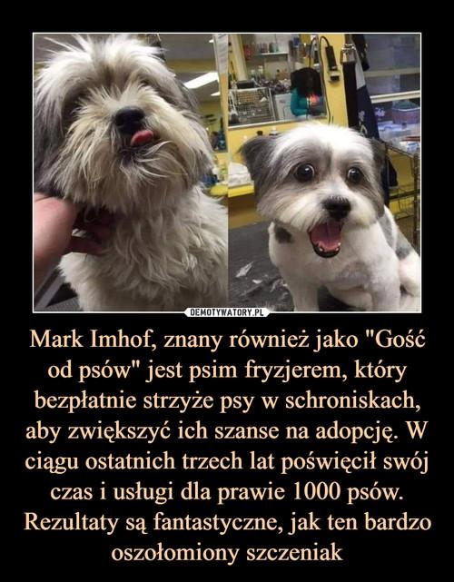 """Mark Imhof, znany również jako """"Gość od psów"""" jest psim fryzjerem, który bezpłatnie strzyże psy w schroniskach, aby zwiększyć ich szanse na adopcję. W ciągu ostatnich trzech lat poświęcił swój czas i usługi dla prawie 1000 psów. Rezultaty są fantastyczne, jak ten bardzo oszołomiony szczeniak"""