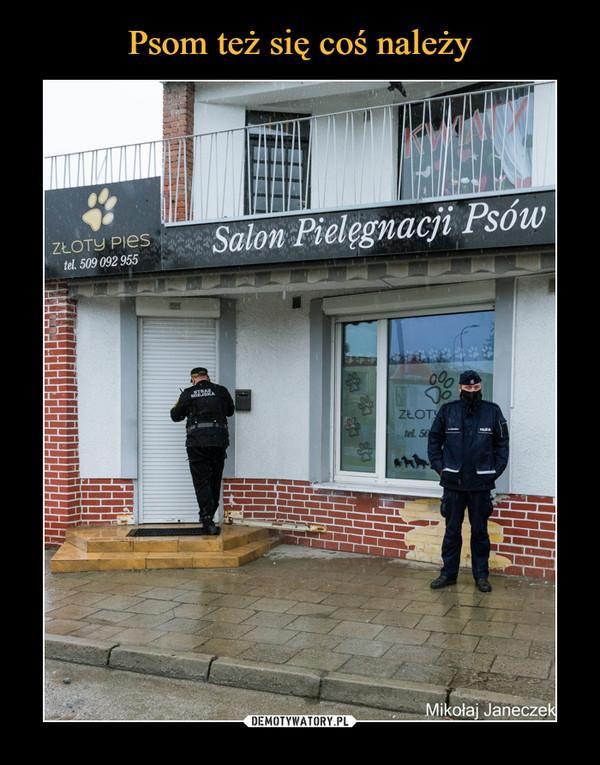 –  Salon pielęgnacji psów