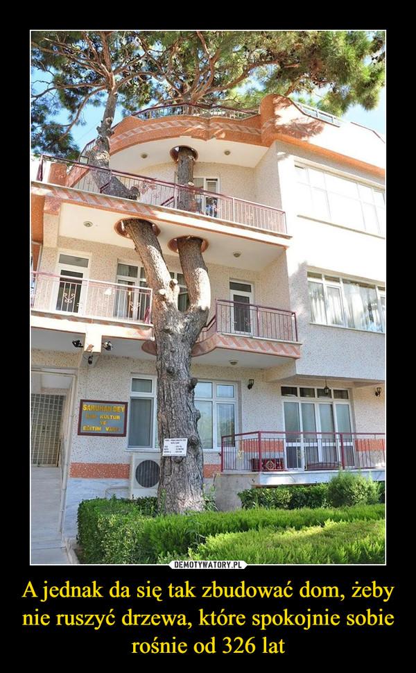 A jednak da się tak zbudować dom, żeby nie ruszyć drzewa, które spokojnie sobie rośnie od 326 lat –