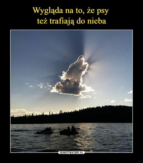 Wygląda na to, że psy  też trafiają do nieba