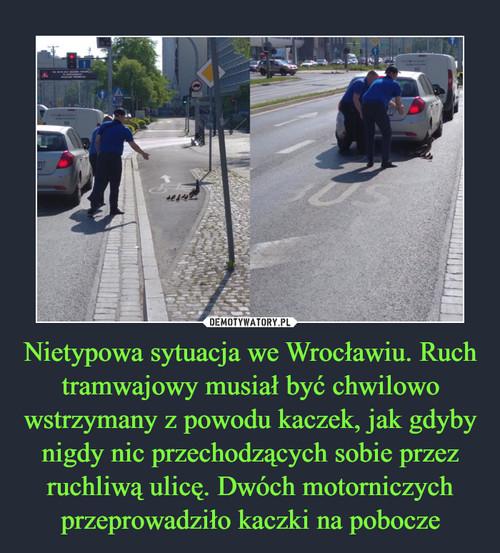 Nietypowa sytuacja we Wrocławiu. Ruch tramwajowy musiał być chwilowo wstrzymany z powodu kaczek, jak gdyby nigdy nic przechodzących sobie przez ruchliwą ulicę. Dwóch motorniczych przeprowadziło kaczki na pobocze