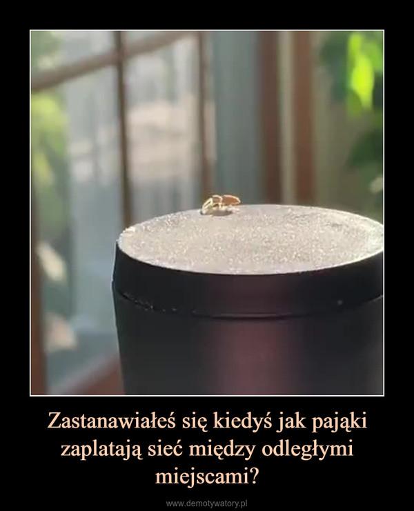 Zastanawiałeś się kiedyś jak pająki zaplatają sieć między odległymi miejscami? –