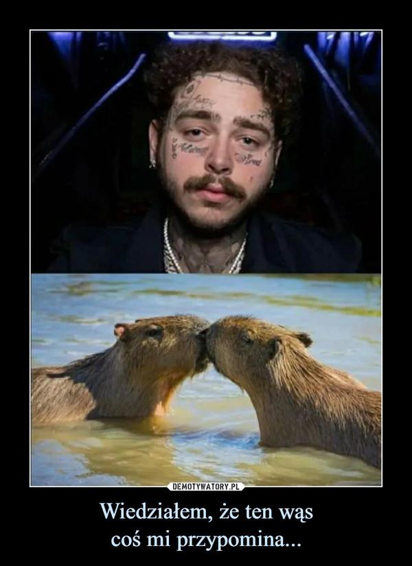 Wiedziałem, że ten wąscoś mi przypomina... –