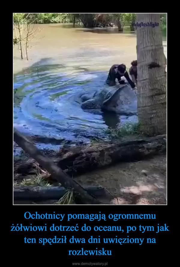 Ochotnicy pomagają ogromnemu żółwiowi dotrzeć do oceanu, po tym jak ten spędził dwa dni uwięziony na rozlewisku –