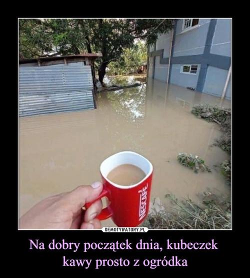 Na dobry początek dnia, kubeczek  kawy prosto z ogródka
