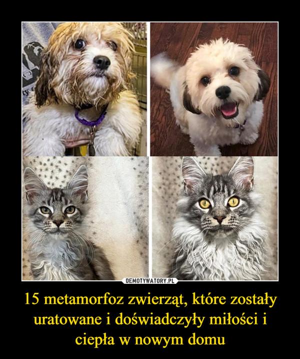 15 metamorfoz zwierząt, które zostały uratowane i doświadczyły miłości i ciepła w nowym domu –
