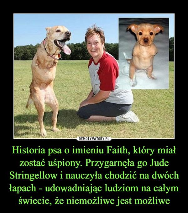 Historia psa o imieniu Faith, który miał zostać uśpiony. Przygarnęła go Jude Stringellow i nauczyła chodzić na dwóch łapach - udowadniając ludziom na całym świecie, że niemożliwe jest możliwe –