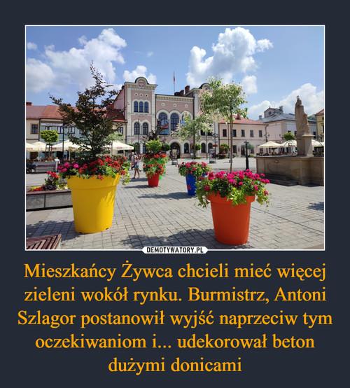 Mieszkańcy Żywca chcieli mieć więcej zieleni wokół rynku. Burmistrz, Antoni Szlagor postanowił wyjść naprzeciw tym oczekiwaniom i... udekorował beton dużymi donicami