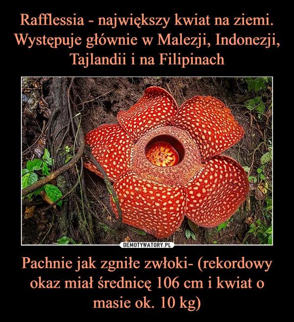 Pachnie jak zgniłe zwłoki- (rekordowy okaz miał średnicę 106 cm i kwiat o masie ok. 10 kg) –