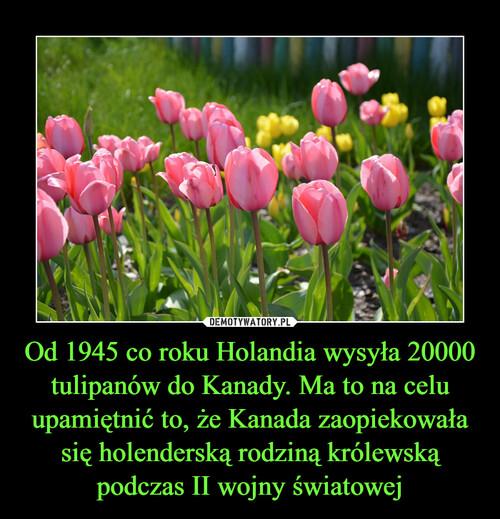 Od 1945 co roku Holandia wysyła 20000 tulipanów do Kanady. Ma to na celu upamiętnić to, że Kanada zaopiekowała się holenderską rodziną królewską podczas II wojny światowej