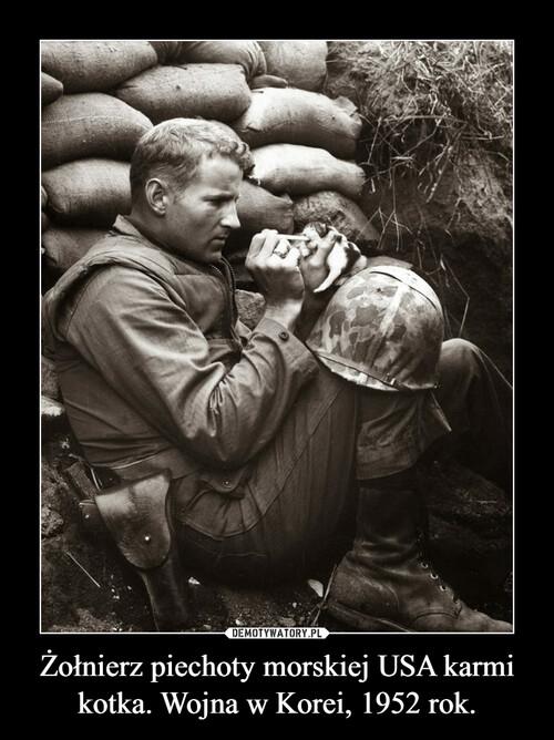 Żołnierz piechoty morskiej USA karmi kotka. Wojna w Korei, 1952 rok.