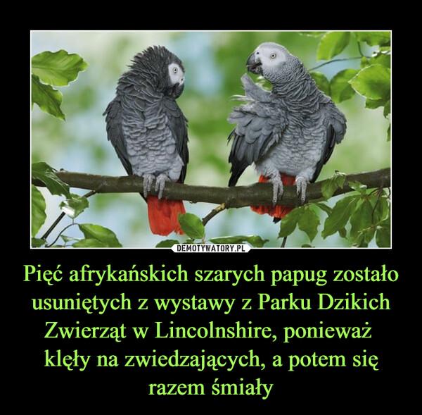 Pięć afrykańskich szarych papug zostało usuniętych z wystawy z Parku Dzikich Zwierząt w Lincolnshire, ponieważ klęły na zwiedzających, a potem się razem śmiały –