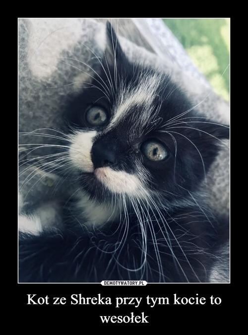 Kot ze Shreka przy tym kocie to wesołek