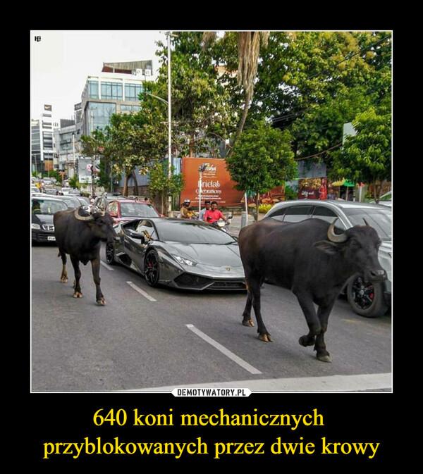 640 koni mechanicznych przyblokowanych przez dwie krowy –