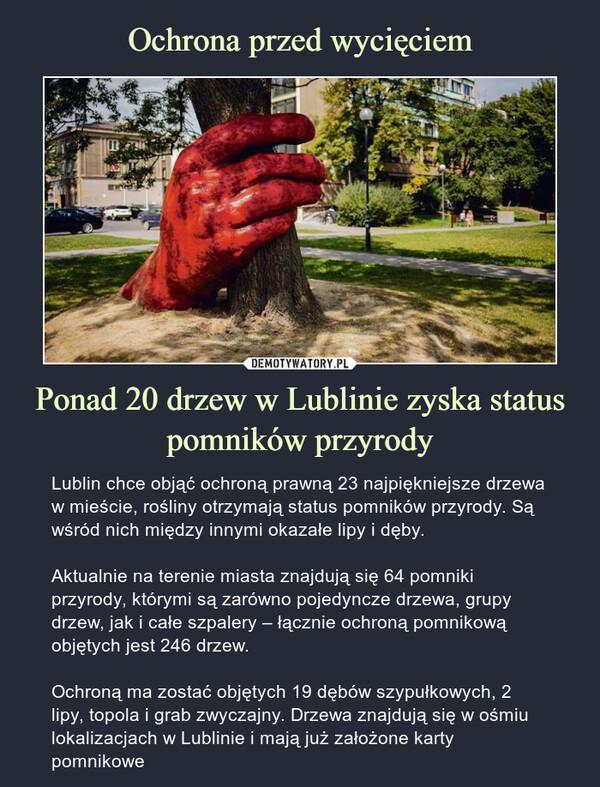 Ponad 20 drzew w Lublinie zyska status pomników przyrody – Lublin chce objąć ochroną prawną 23 najpiękniejsze drzewa w mieście, rośliny otrzymają status pomników przyrody. Są wśród nich między innymi okazałe lipy i dęby.Aktualnie na terenie miasta znajdują się 64 pomniki przyrody, którymi są zarówno pojedyncze drzewa, grupy drzew, jak i całe szpalery – łącznie ochroną pomnikową objętych jest 246 drzew.Ochroną ma zostać objętych 19 dębów szypułkowych, 2 lipy, topola i grab zwyczajny. Drzewa znajdują się w ośmiu lokalizacjach w Lublinie i mają już założone karty pomnikowe