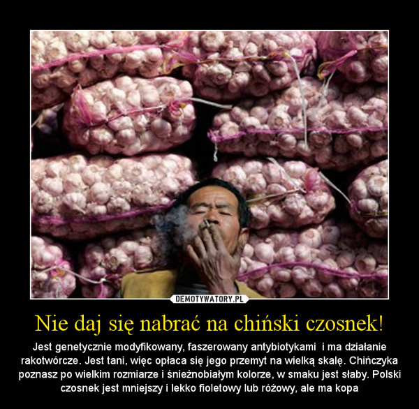 Nie daj się nabrać na chiński czosnek! – Jest genetycznie modyfikowany, faszerowany antybiotykami  i ma działanie rakotwórcze. Jest tani, więc opłaca się jego przemyt na wielką skalę. Chińczyka poznasz po wielkim rozmiarze i śnieżnobiałym kolorze, w smaku jest słaby. Polski czosnek jest mniejszy